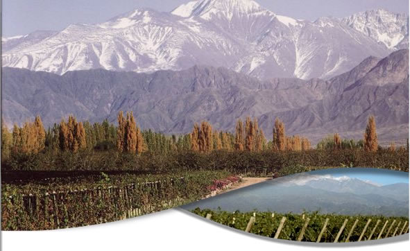 Vineyards in the high zone of Mendoza River